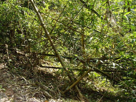 Sanchahe Nature Reserve (10)