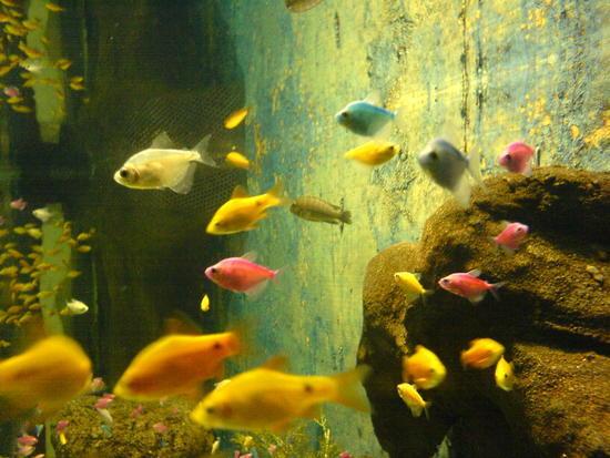 Underwater World & BBQ (8)