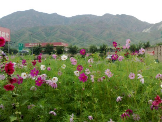 31-Hohhot Desert Adventure