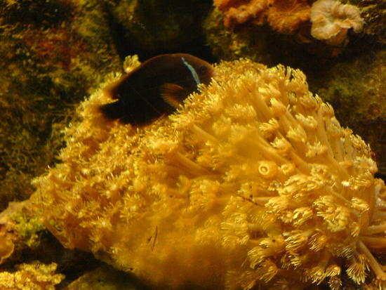 Underwater World & BBQ (21)