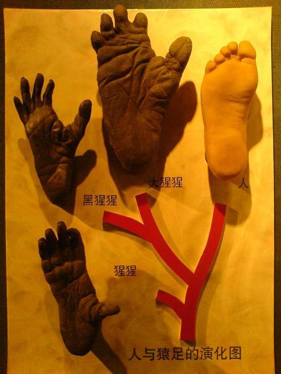 Shanghais Museums Bazaars & Bars (21)