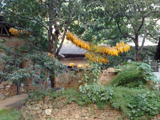 16-Mid Autumn Festival Corn Walk