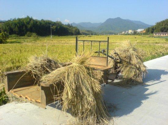 The Great Autumn Rice Harvest Ride 32