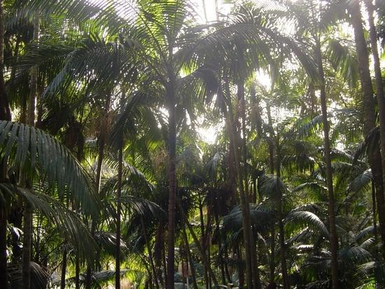 The Gold Coast - Heaven on Earth (38)