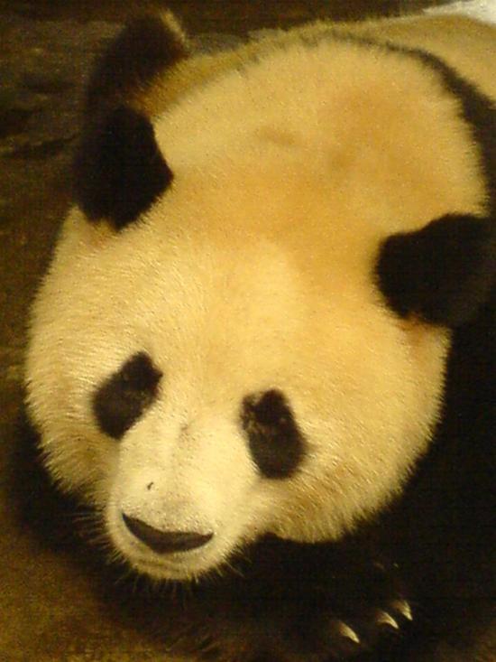 Panda Research Base (4)