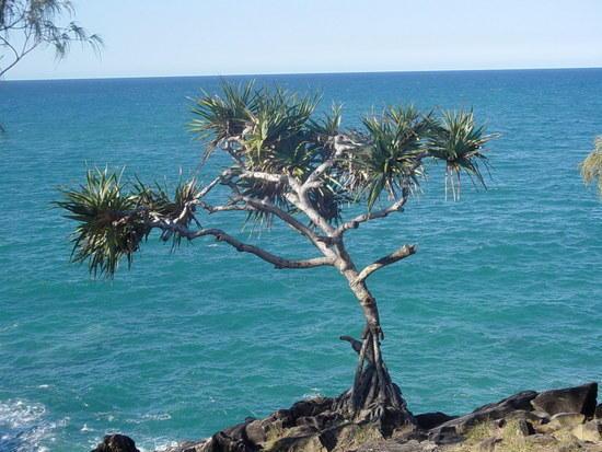 The Sunshine Coast (24)