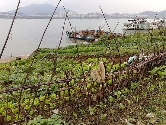 Zhaoqing Museum & River Alleys Adventure