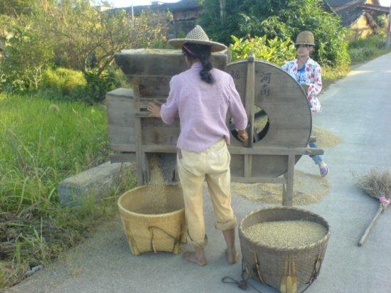 The Great Autumn Rice Harvest Ride 17