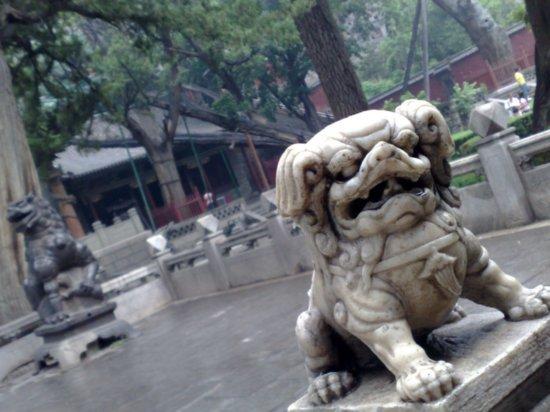2-Jinci Temple Adventure