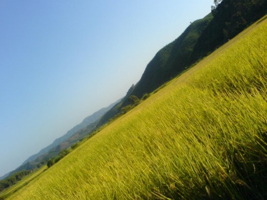 The Great Autumn Rice Harvest Ride 8