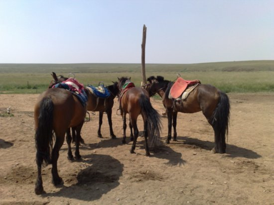 22-Hohhot Grasslands Adventure