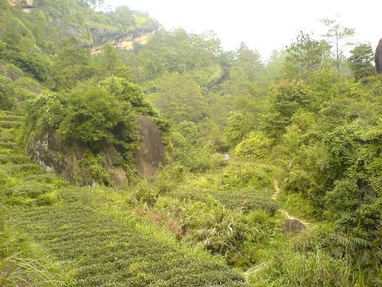 Wuyi Shan Day 2 (46)