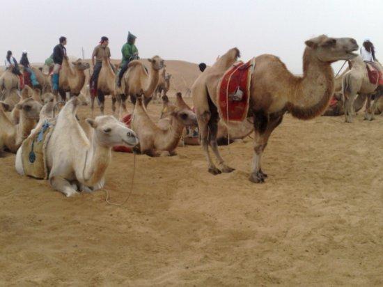 3-Hohhot Desert Adventure