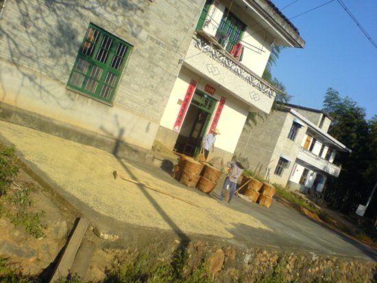The Great Autumn Rice Harvest Ride 12