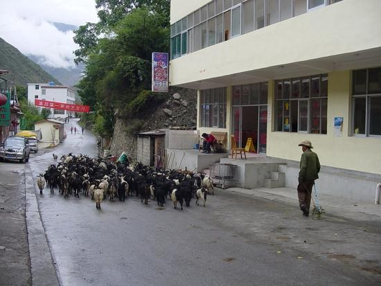 Mingyong  - Not your usual traffic