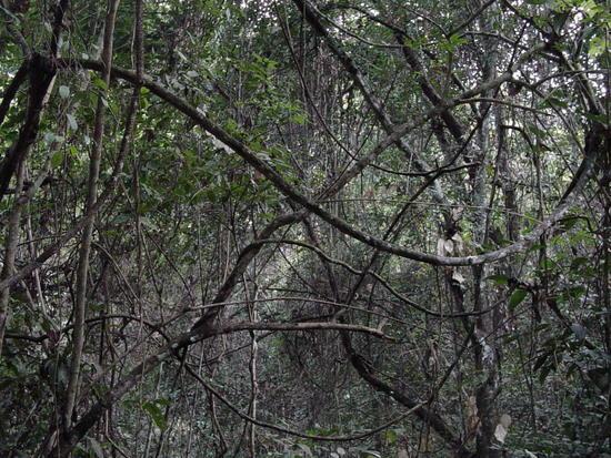 Sanchahe Nature Reserve (7)