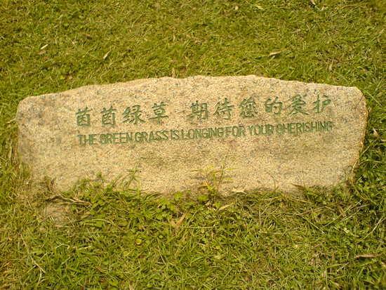 Wuyi Shan Details (11)