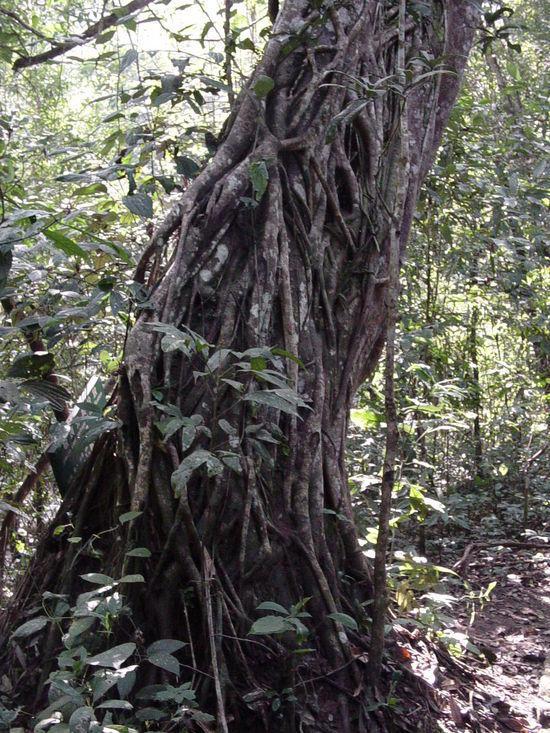 Sanchahe Nature Reserve (12)