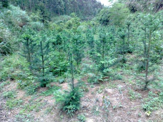 Arbor 'Tree Planting' Day 11