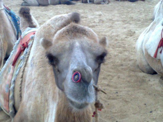 2-Hohhot Desert Adventure