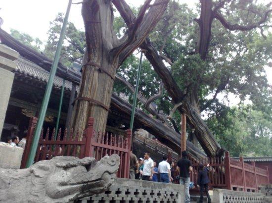 7-Jinci Temple Adventure