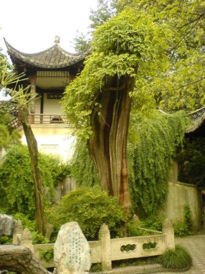 Yangzhou - Slender West Lake & Bonsai 8