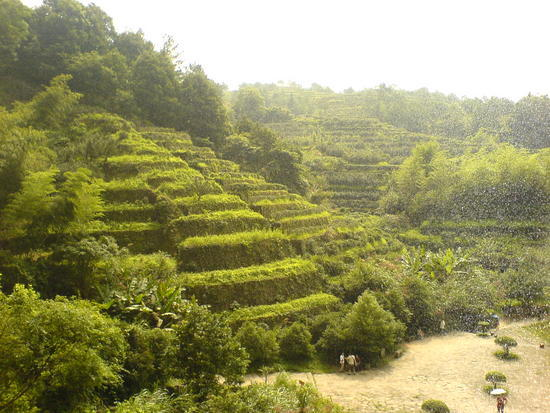 Wuyi Shan Day 2 (4)