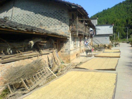 The Great Autumn Rice Harvest Ride 28