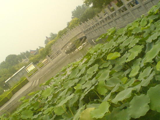 Luoyang White Horse Temple (2)