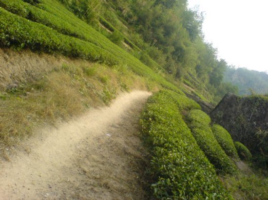 Wuyi Shan Day One 7