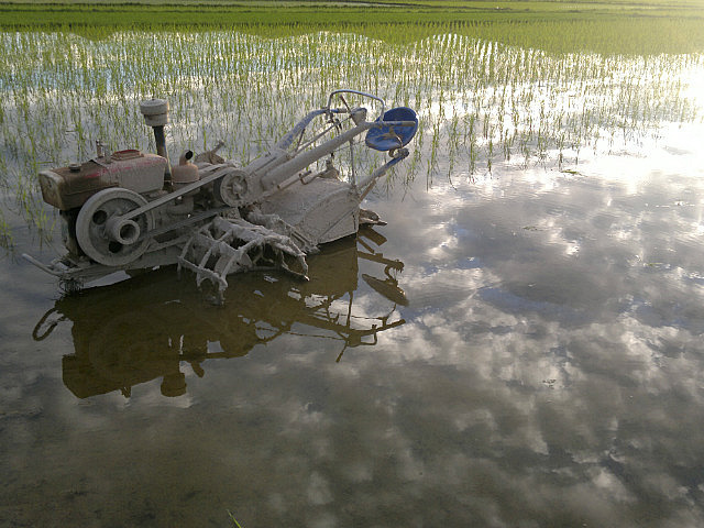 Reflections From A Rice Field