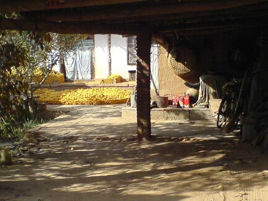 Southern Corn Bike Ride (22)