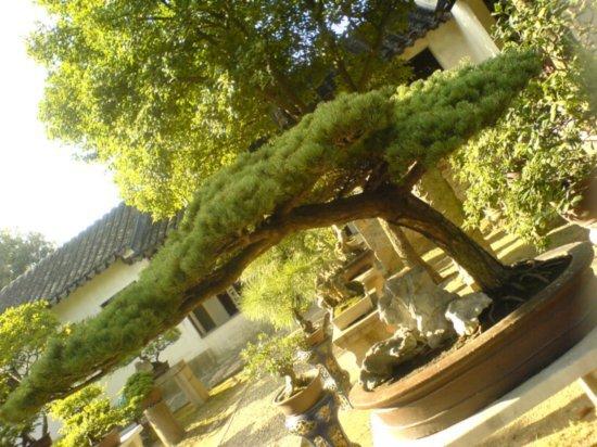 Suzhou - The Garden for Lingering In 7