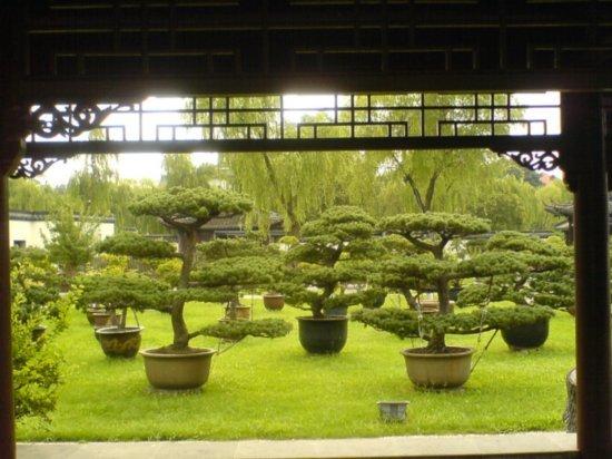 Yangzhou - Slender West Lake & Bonsai 23