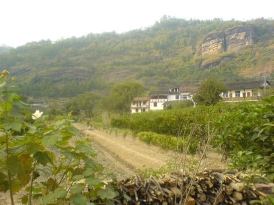 Wuyi Shan Day One 12