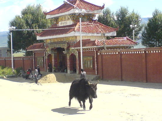 Litang Town & Monastery Walk (46)