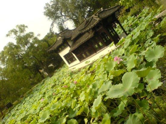 Yangzhou - Slender West Lake & Bonsai 21