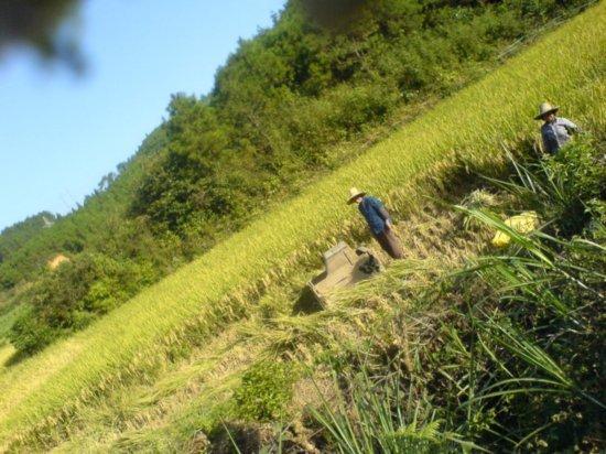 The Great Autumn Rice Harvest Ride 2