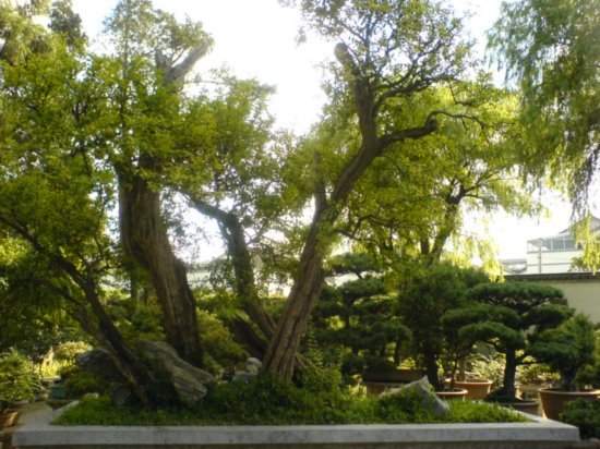 Suzhou - The Garden for Lingering In 4