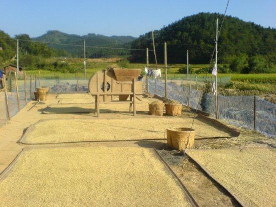 The Great Autumn Rice Harvest Ride 1