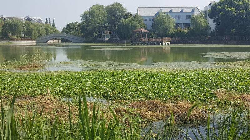 Zhujiajiao Lake Walk For Tings Birthday