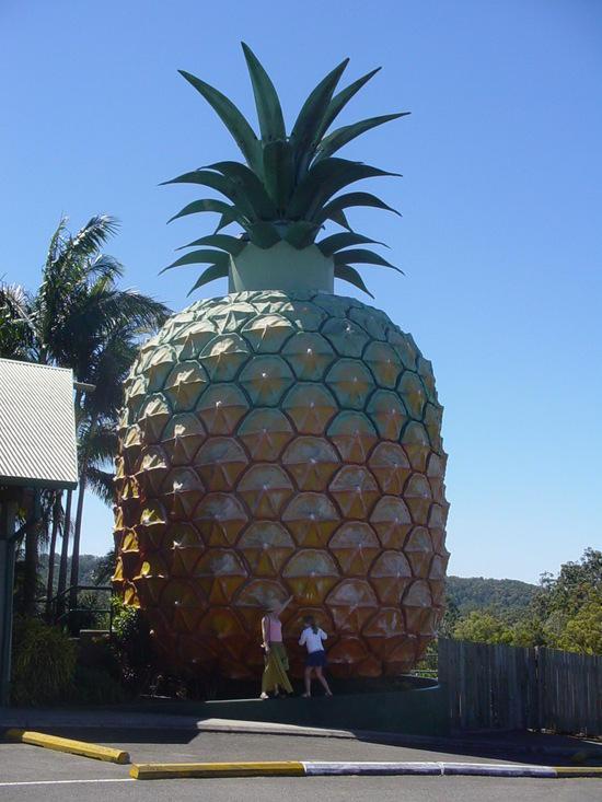 The Sunshine Coast (40)