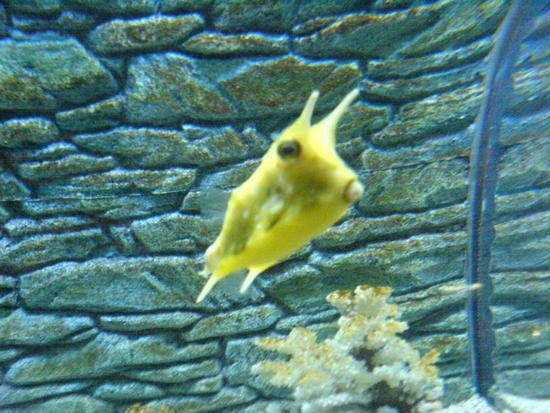Underwater World & BBQ (14)