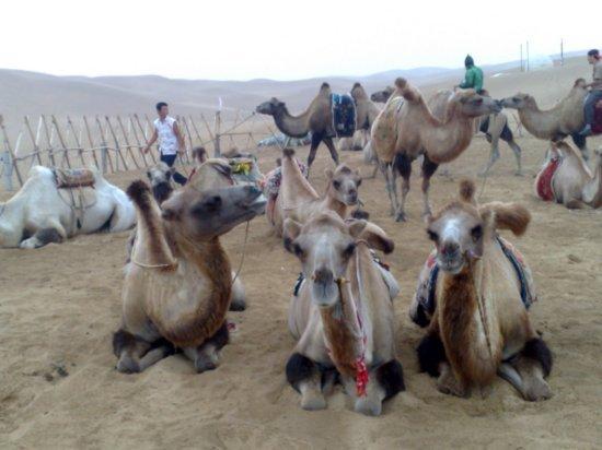 4-Hohhot Desert Adventure