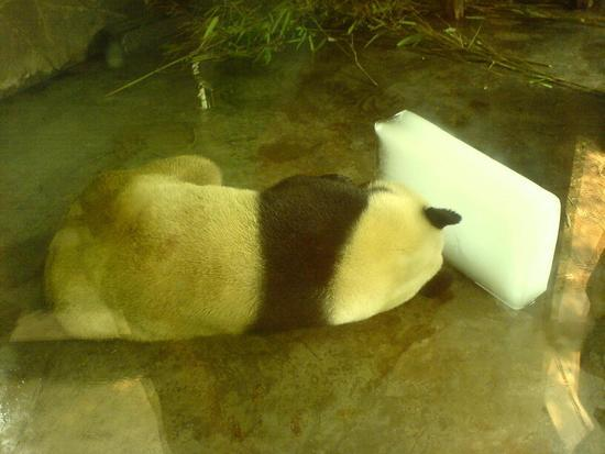 Panda Research Base (2)