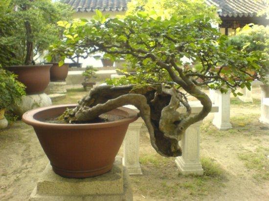 Suzhou - The Garden for Lingering In 6