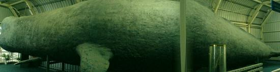 Underwater World & BBQ (13)
