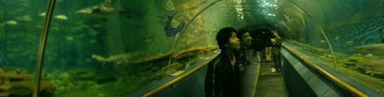 Underwater World & BBQ (23)