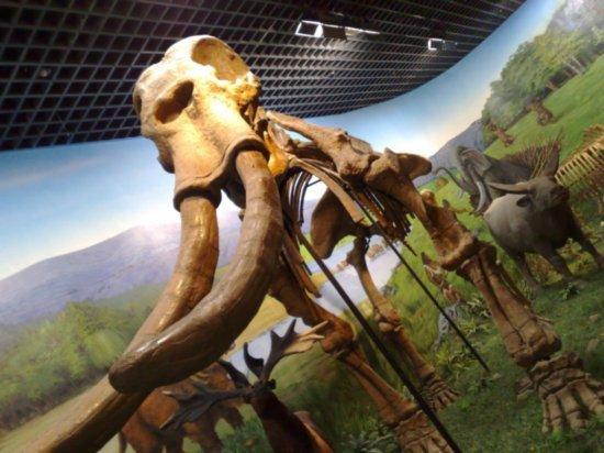 6-Inner Mongolia Museum