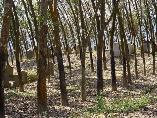 The Jinghong Mud Map Walk (16)